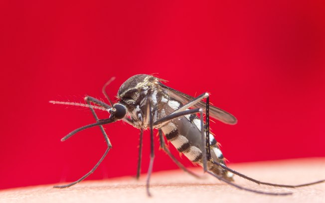 Quase mil cidades podem ter surto de dengue, zika e chikungunya no país