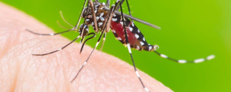 Casos de dengue aumentam 37,9% no Maranhão, segundo Ministério da Saúde