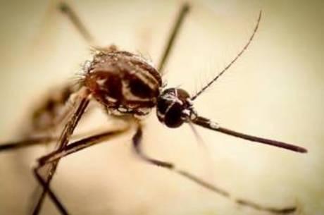 Qual a diferença entre os sintomas da gripe e da dengue?