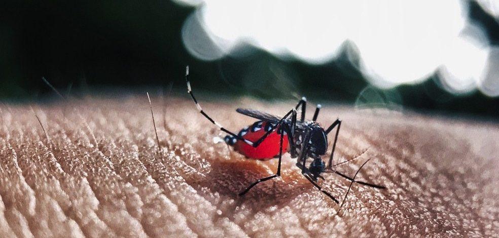 Controle do Aedes aegypti: A hora é agora!