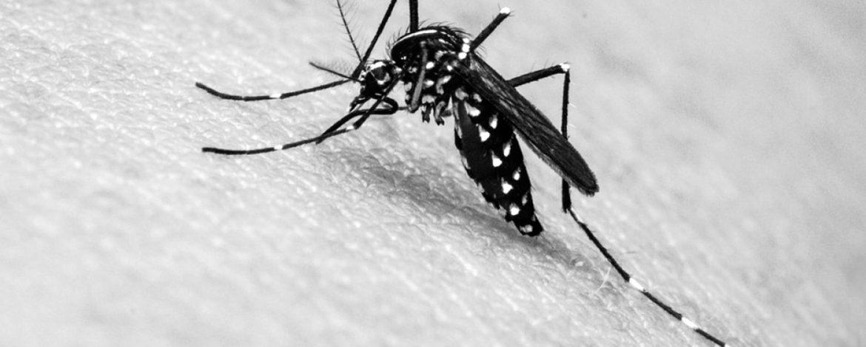 As dores dos sintomas da dengue