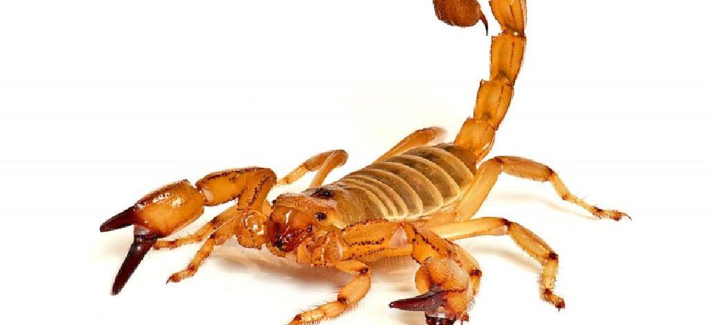 Menino de 12 anos morre após ser picado por escorpião em ciclovia de Casa Branca