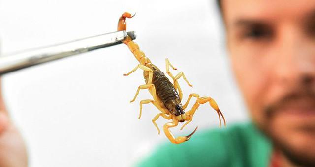 Creche infestada de escorpião é interditada em Vassouras