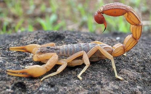 Menino de 5 anos morre após ser picado por escorpião enquanto brincava
