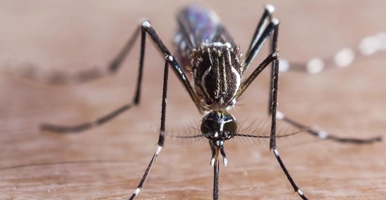 30/09/2020 – Casos de dengue no Brasil em 2020 se aproximam de um milhão