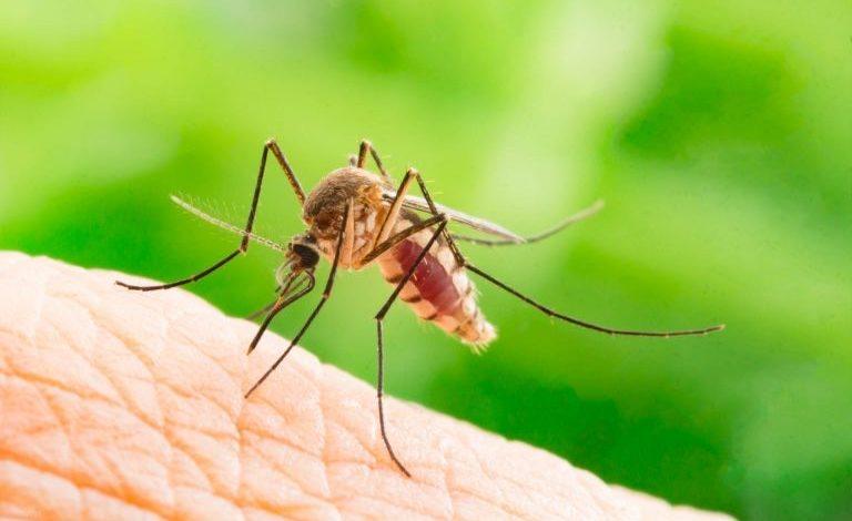 Paraná soma cinco mortes por dengue desde agosto