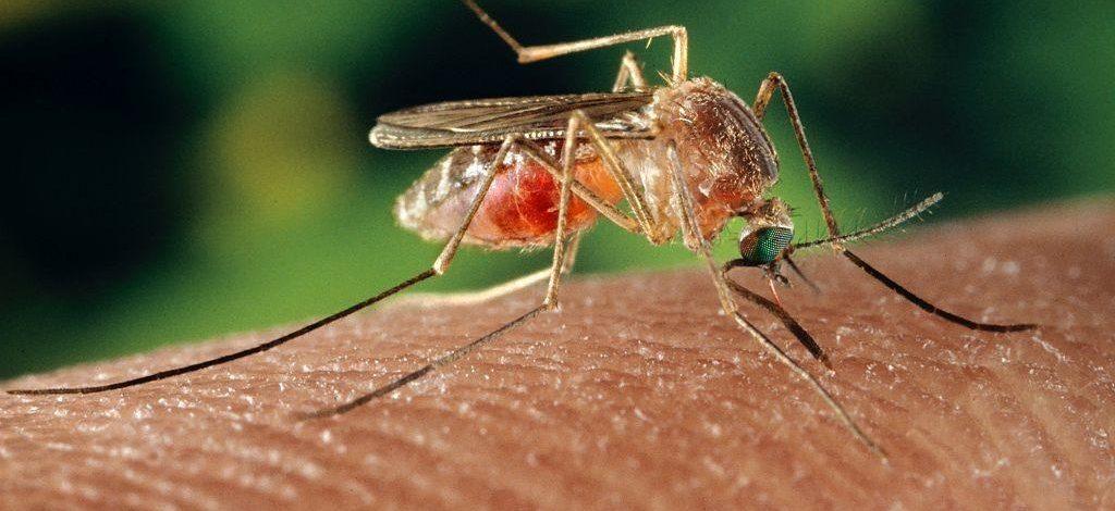 Pela primeira vez, vírus do Nilo Ocidental é detectado em Minas Gerais