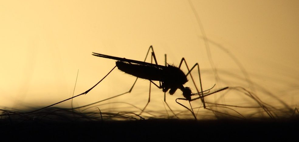 Quem já teve dengue tem mais chances de ter COVID-19 sintomática, diz estudo