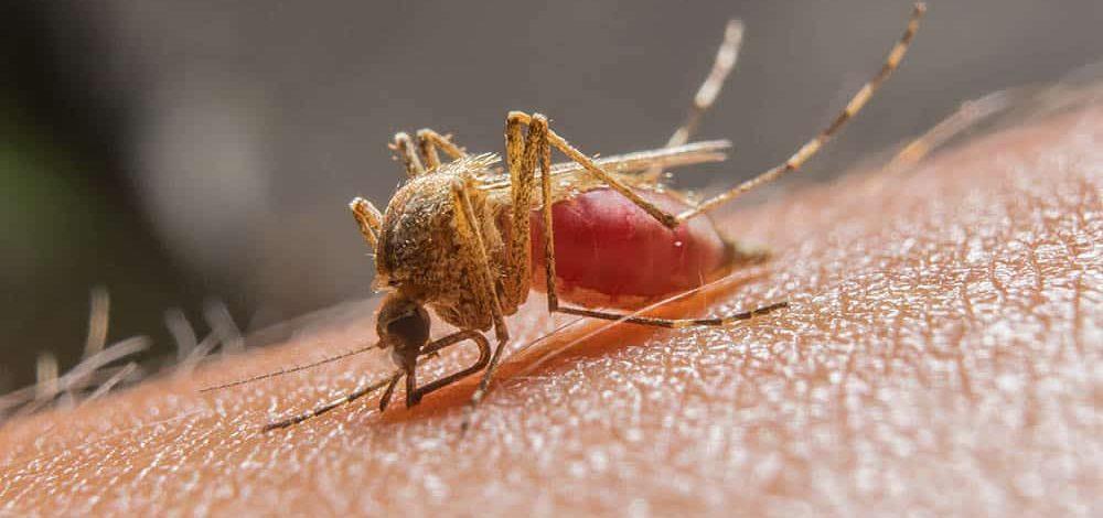 Crise climática pode aumentar o risco de malária e dengue para 8 milhões de pessoas