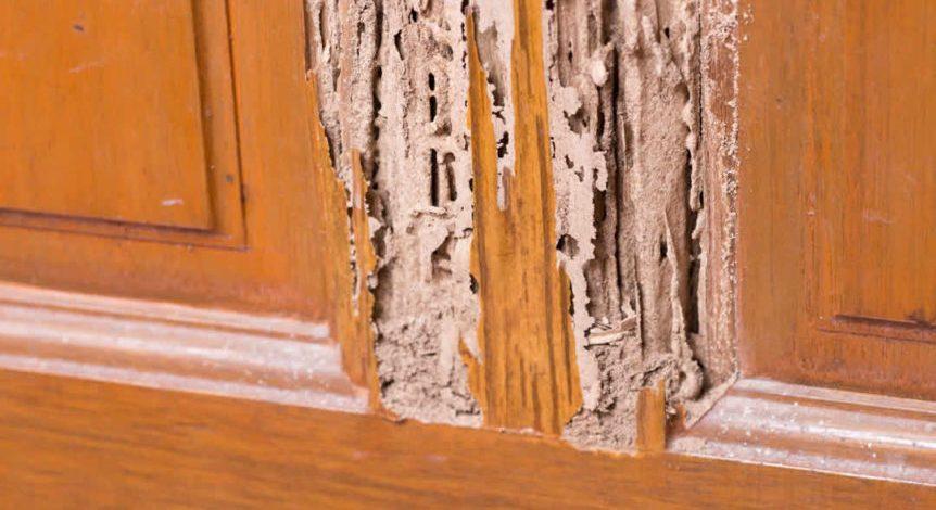 Os 10 principais desafios no controle de cupim de madeira seca